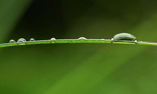 Grasses with raindrop v4_43G1383