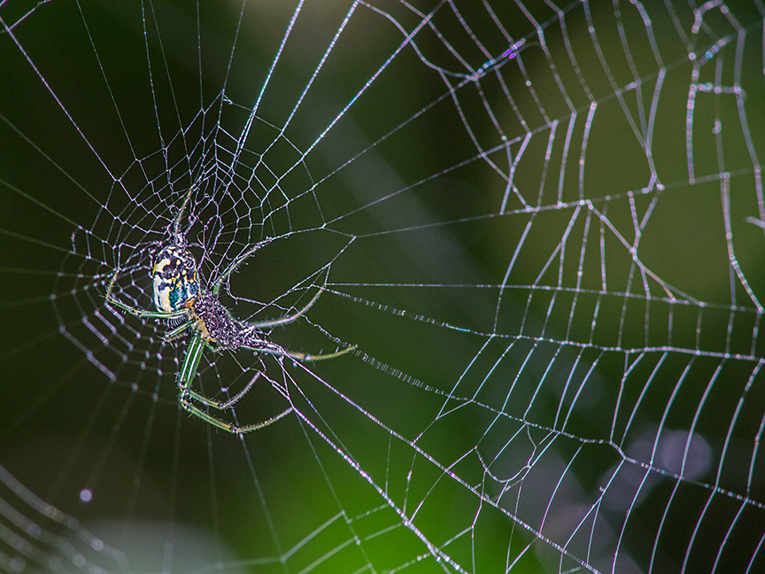Orb Weaver Web Photoartflight