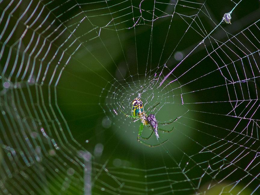 Orb Weaver Web Photoartflight