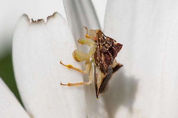 yard bug v2_80I6027