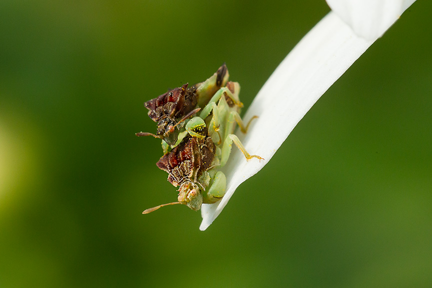yard bugs v3_43G5025
