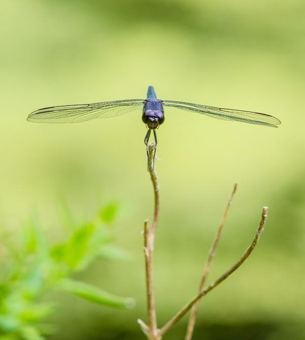 dragonfly v1 mcfaul v2_43G8837