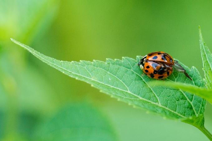 lady bug v2_43G7521