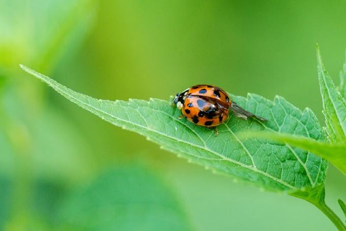 lady bug v2_43G7531