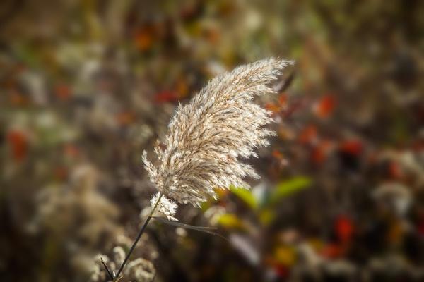 BH Grasses v2 2015_43G5616