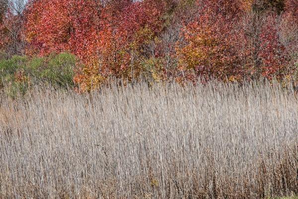 bh lndscp v1 grasses w fall color_80I7397