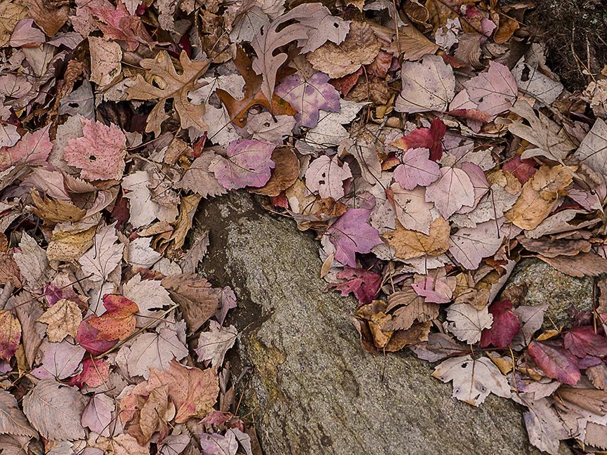 fall color v1_1350202