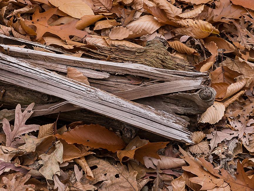 fall leaves v1_1350069
