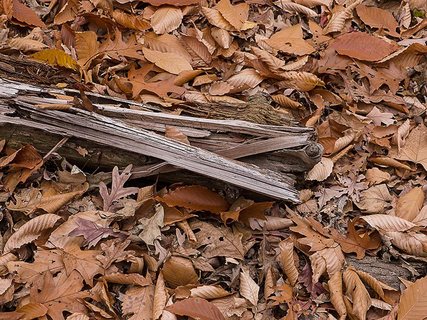 fall leaves v1_1350070