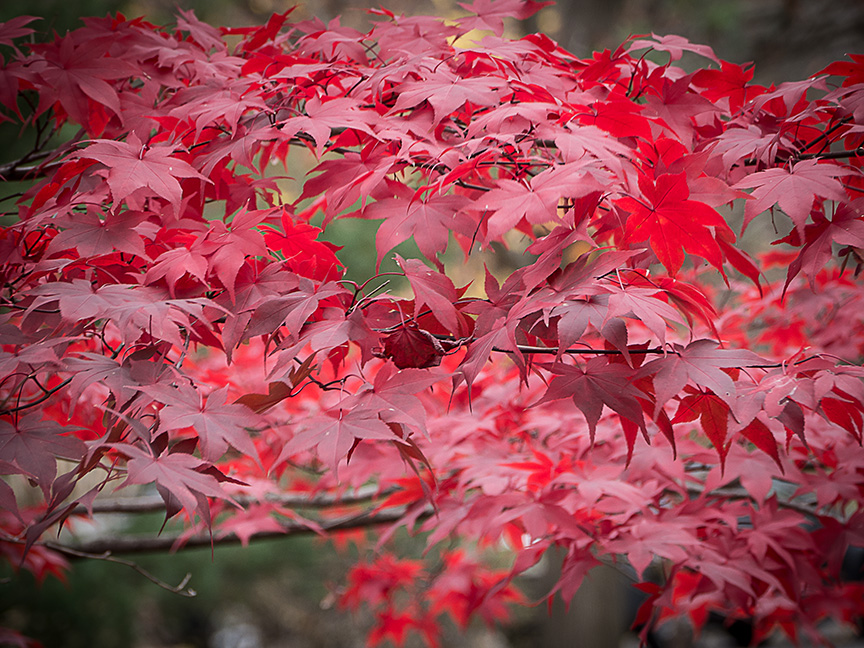 fall leaves v1_1350208