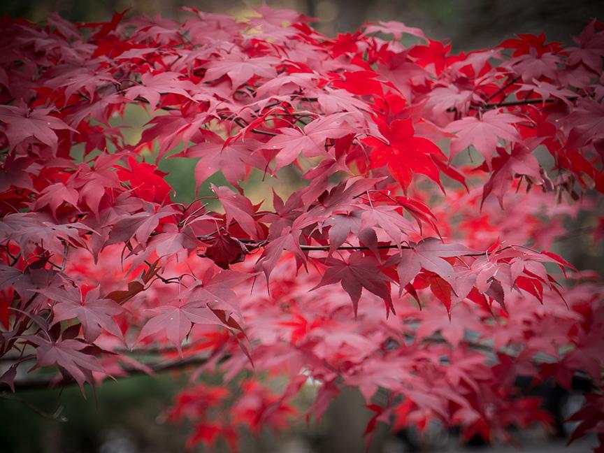 fall leaves v1_1350211