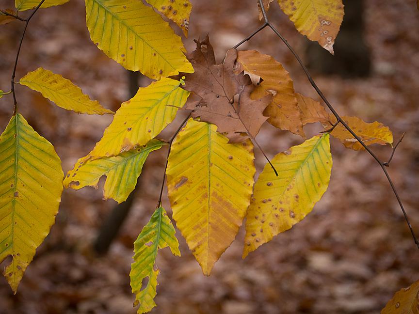 fall leaves_1350081