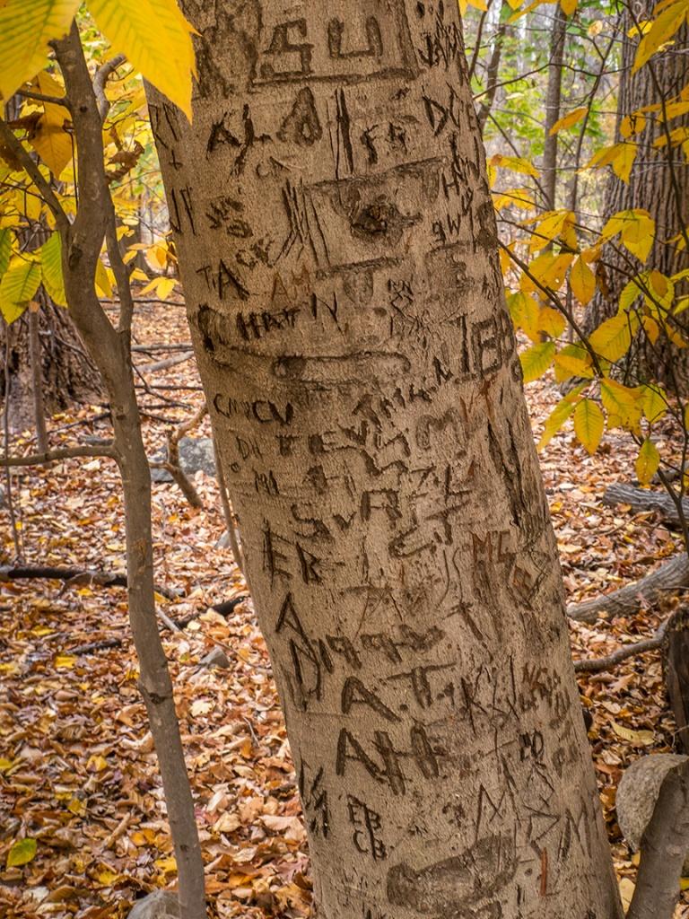 fall tree graffeity_1350134