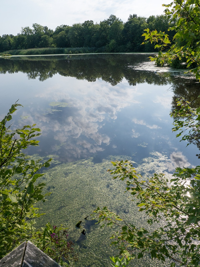water reflections _1350027