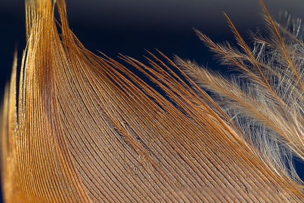 feather stack v2_hp 43G6010