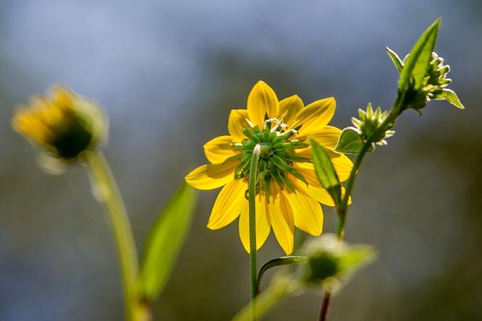 flower-backlite-v2_43g2317