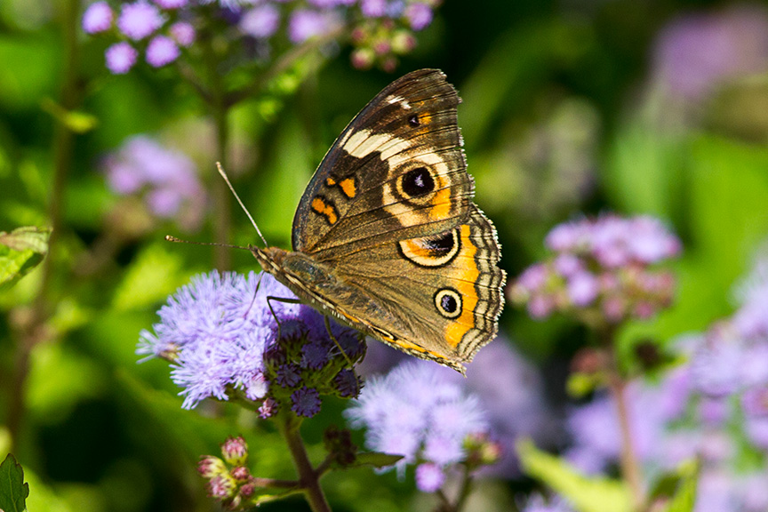 frit-butterfly-v1-lg-2016_43g3006