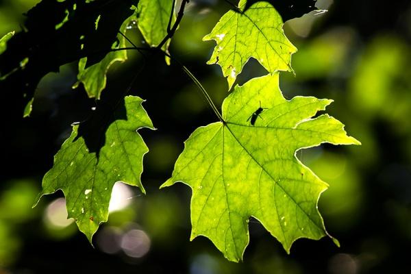 leaf-bug-v2-lg-2016_43g2242