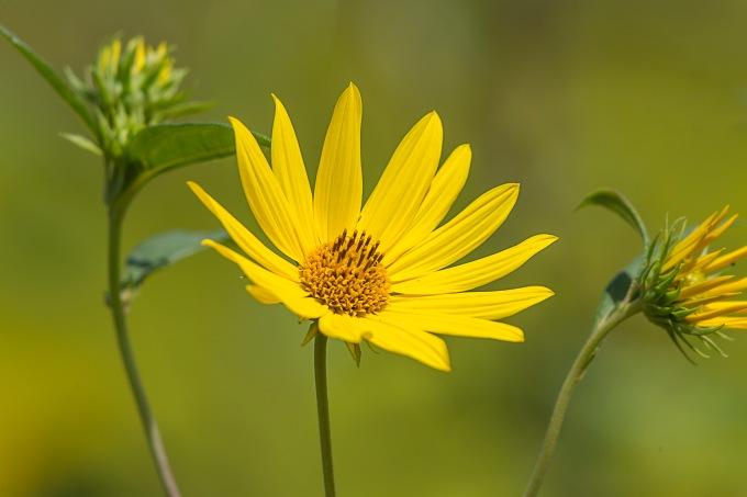 wildflower-v1-lg-2016_43g3456
