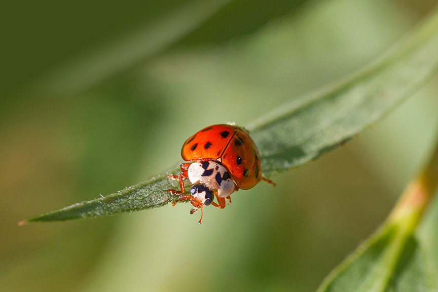 lady-bug-v3-davidsons-mill-2016_43g6456