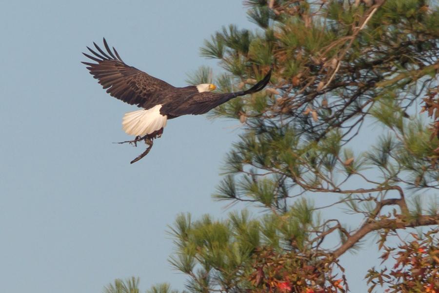 be-flying-nest-w-meal-v3_43g7128