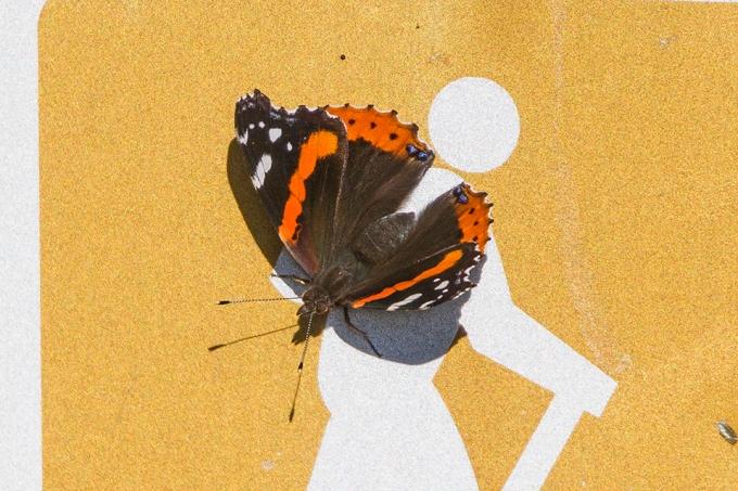butterfly-v2-bwr-2016_43g7327-2