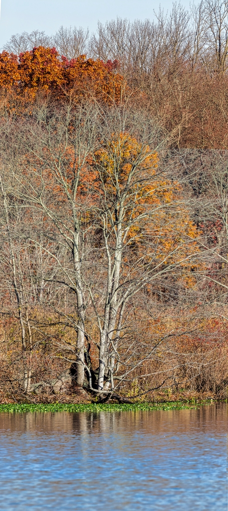 cf-fall-tree-pano-v3-11-16