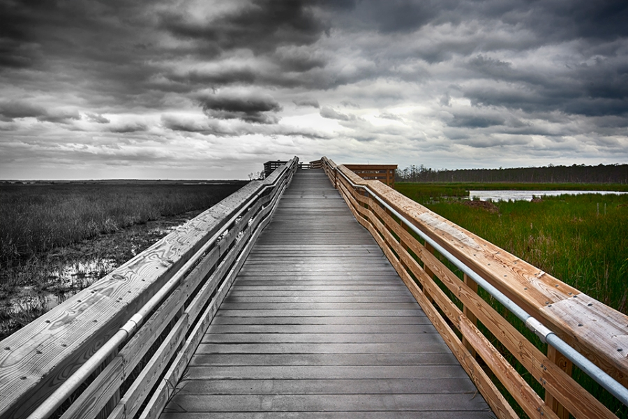 blackwater-observation-platform-24mm_bw-color-blnd-horiz-80i9561
