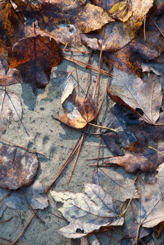 bwr-tt-leaves-ent-sandy-path-pawprnt-v2_mal8848