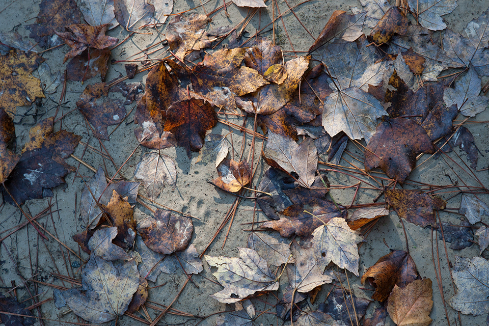 bwr-tt-leaves-ent-sandy-path-v1_mal8848