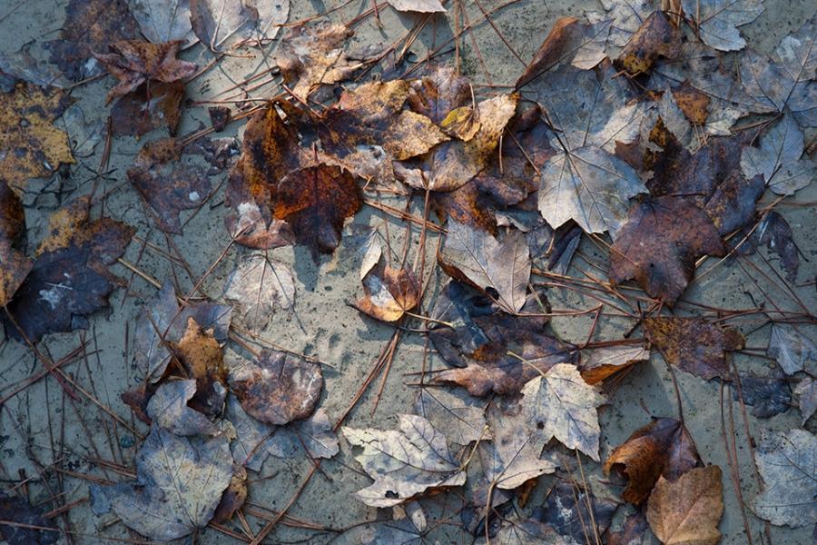 bwr-tt-leaves-ent-sandy-path-v1_mal8848