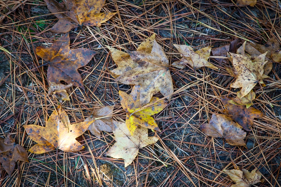 bwr-tt-leaves-path-v1-11-16_mal8839