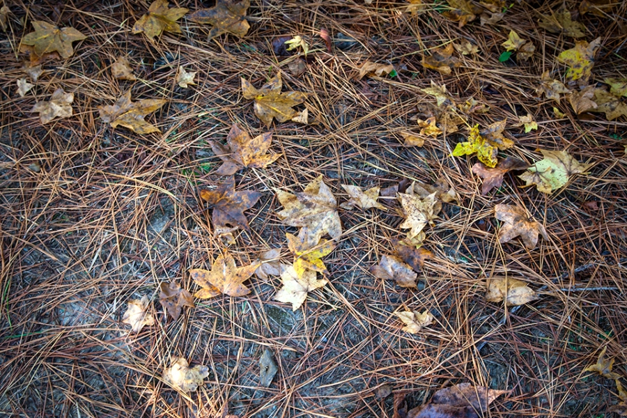 bwr-tt-leaves-path-v1-11-16_mal8843