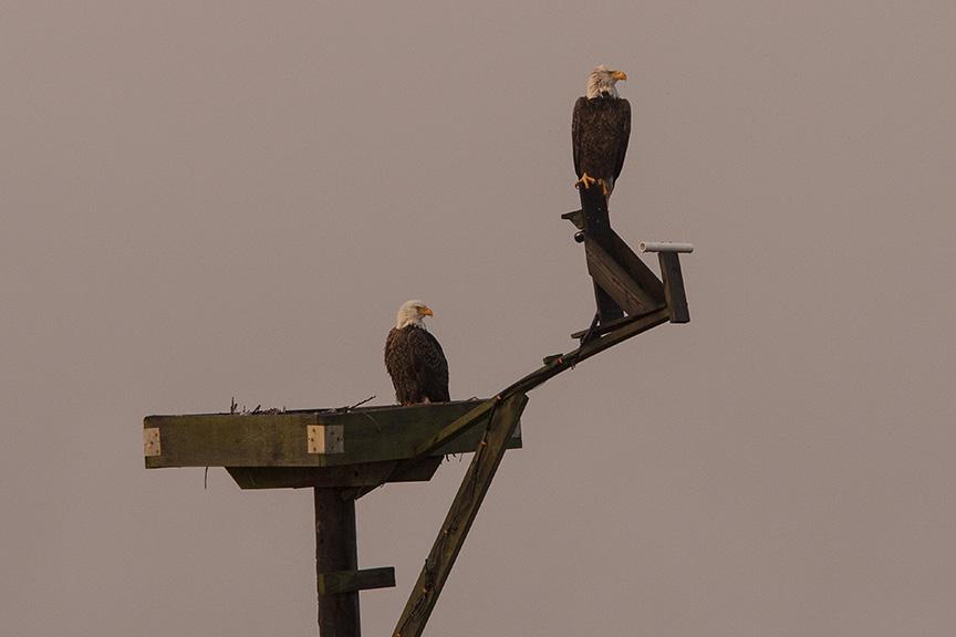 eagles-bwr-sunset-v2_80i7640