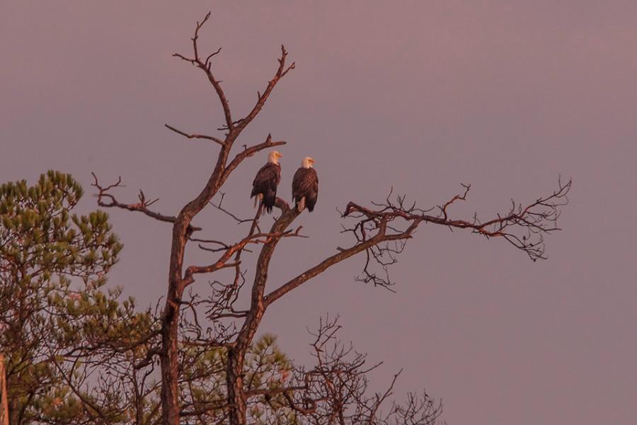 eagles-sunset-v2-bwr_80i7678