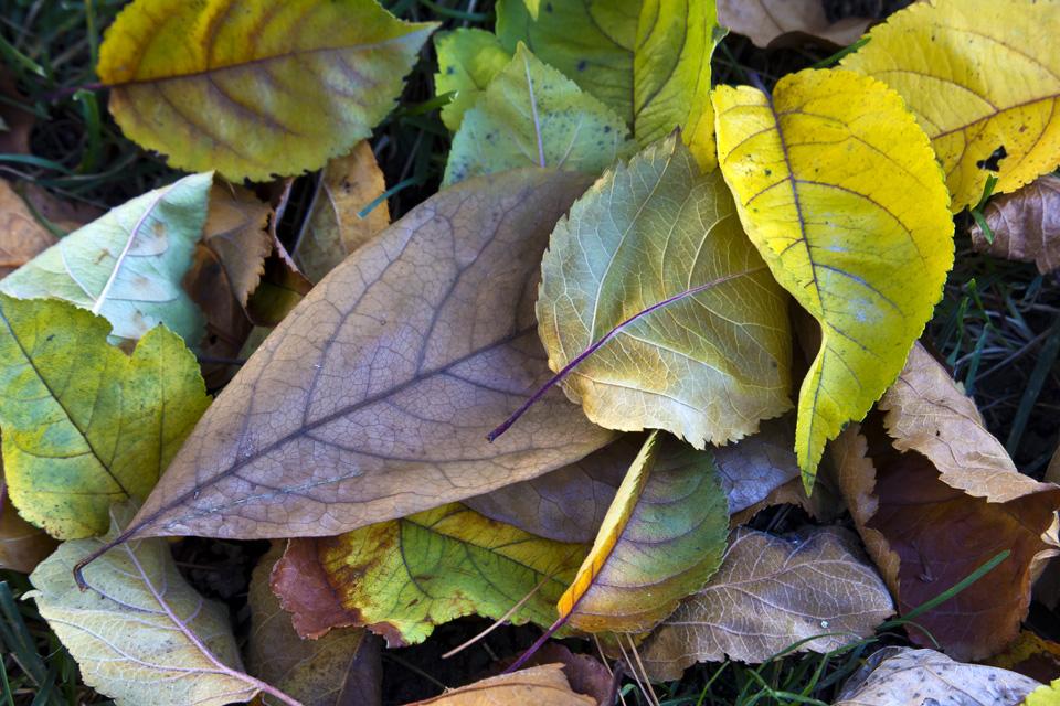 fall-leaves-v1_43g9741