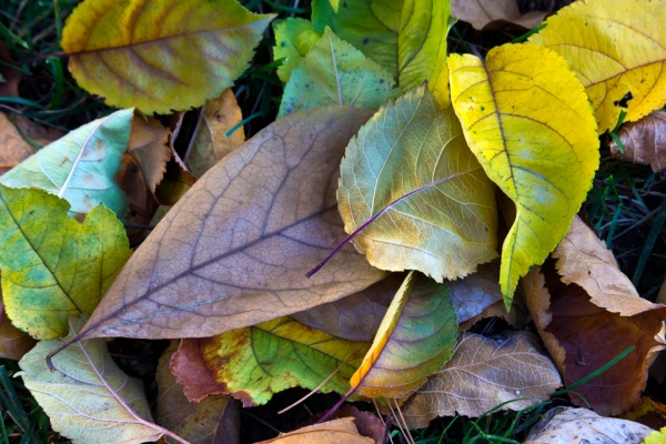 fall-leaves-v1_43g9741