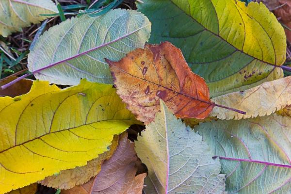 fall-leaves-v1_43g9795