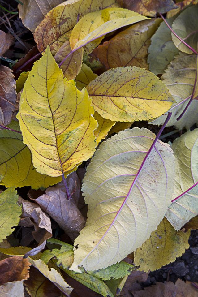fall-leaves-v1_43g9804
