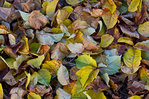 _fall-leaves-v2-43g9848