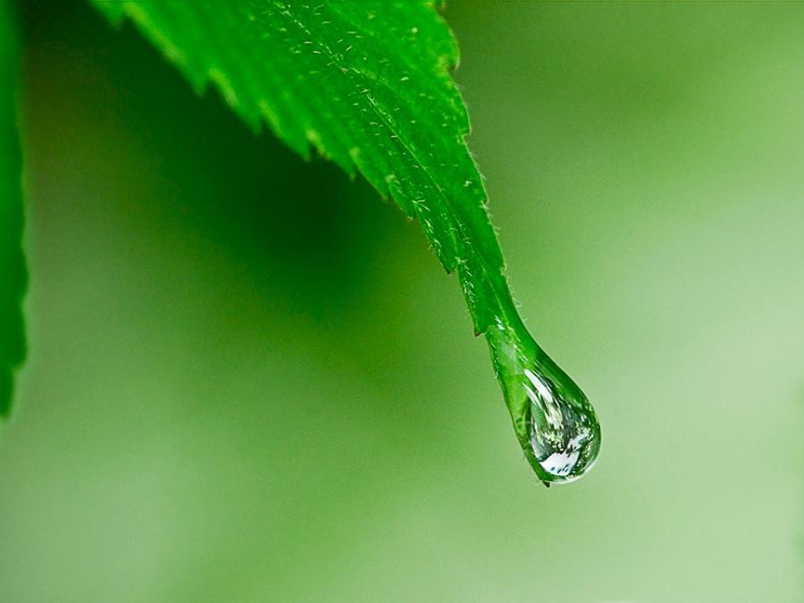 raindrop-v1_1080512
