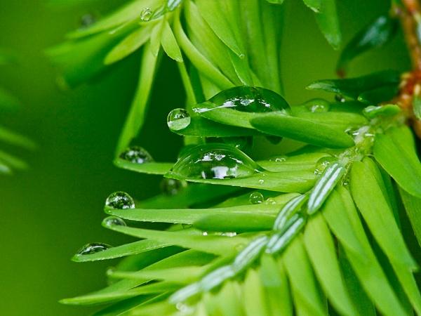 raindrops-v1_1080610