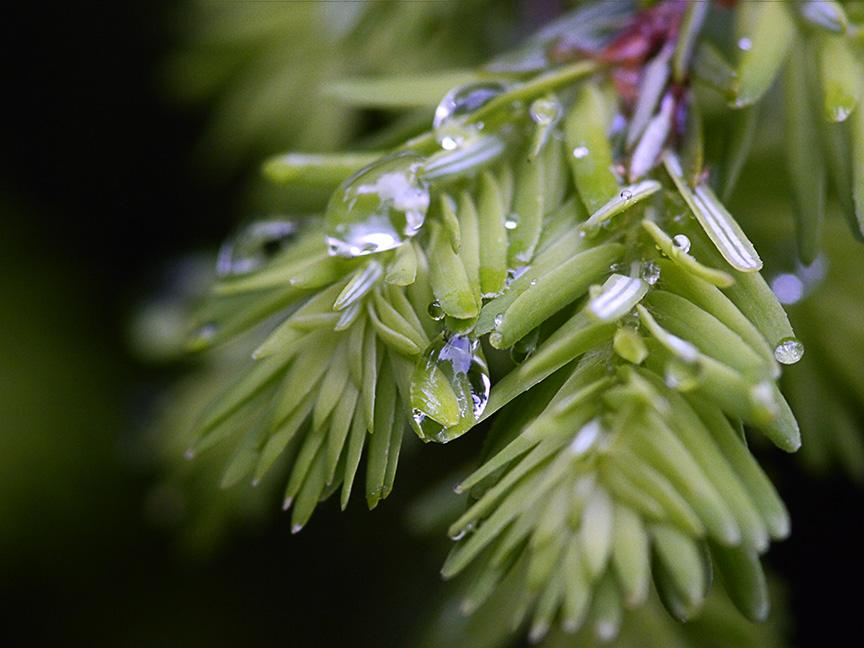 raindrops-v1_1080686