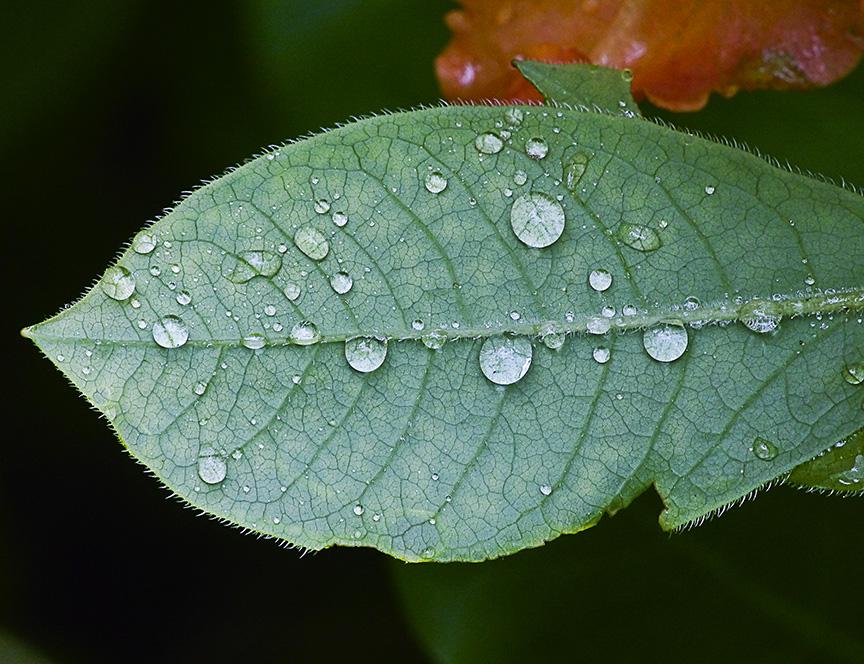 raindrops-v1_1080795