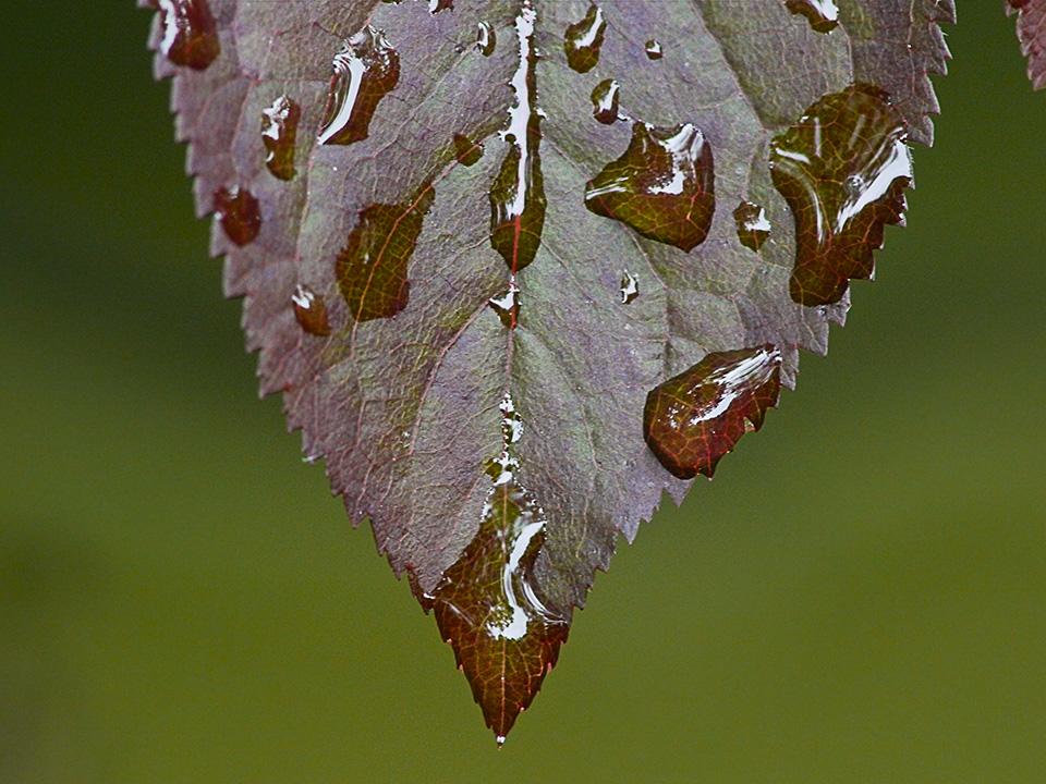 raindrops-v1_1080862