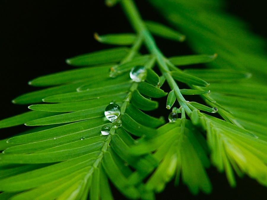 raindrops-v1_1080874