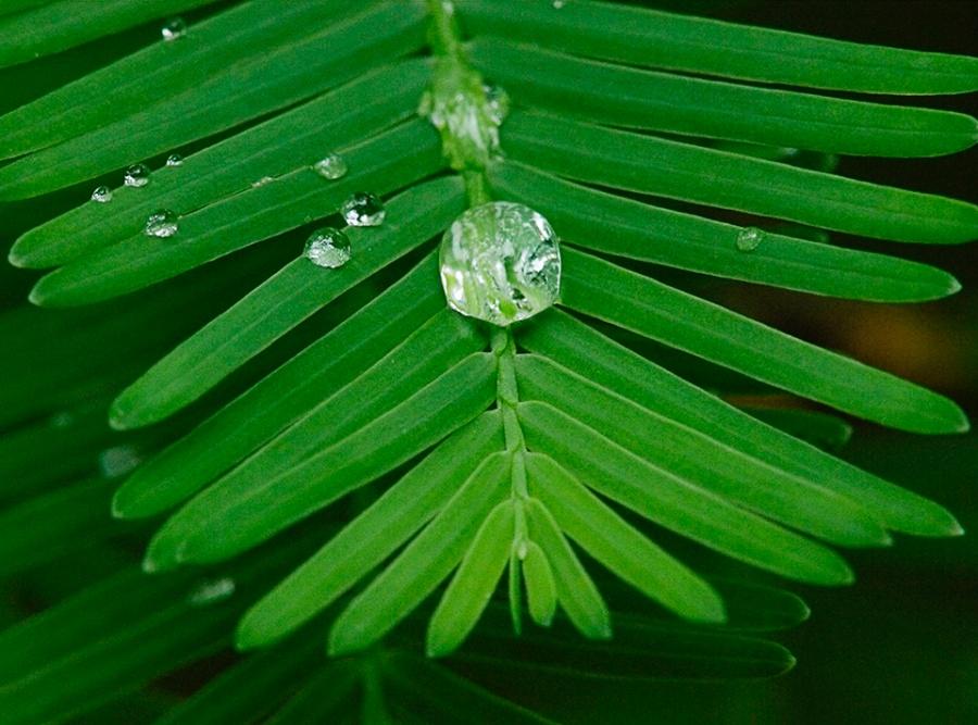 raindrops-v1_1080983