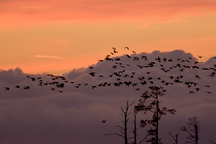 sunset-bwr-flyout-v1_80i7796