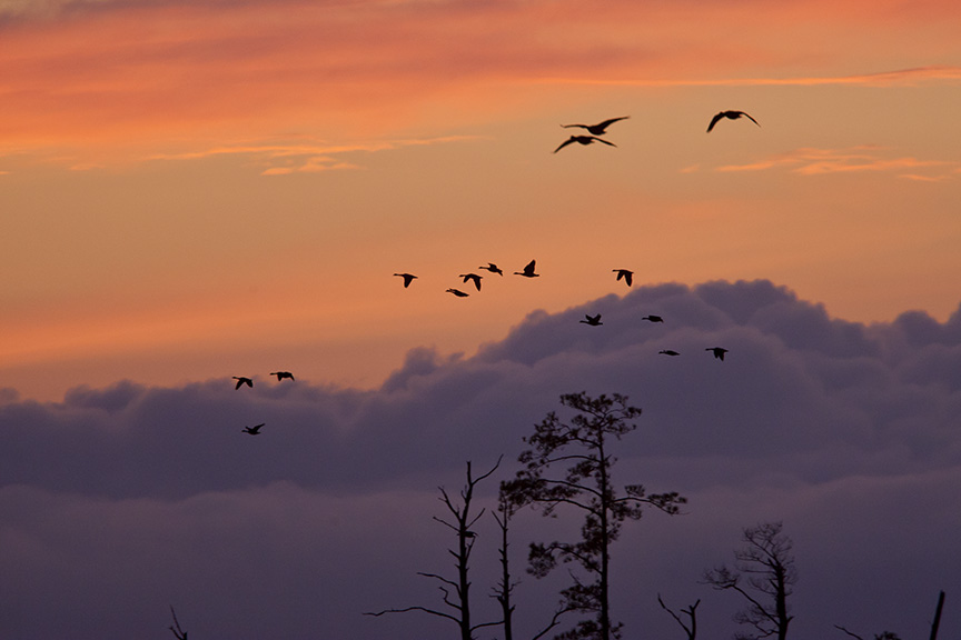 sunset-flyout-v1-bwr-_80i7739