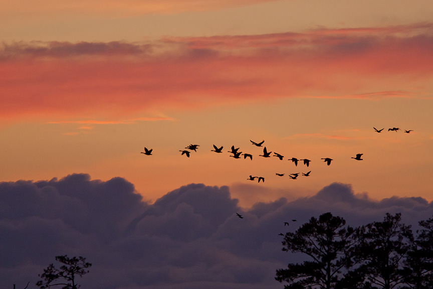 sunset-flyout-v1-bwr_80i7817